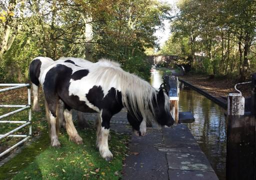 HorsesAtherstoneLocks
