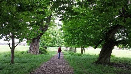 GordChestnutTrees