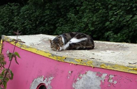 CatOnBoat