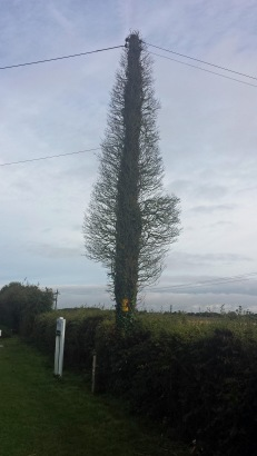 TelegraphPoleTree