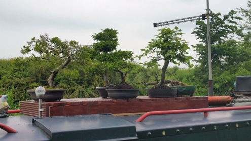 Bonsai Boat